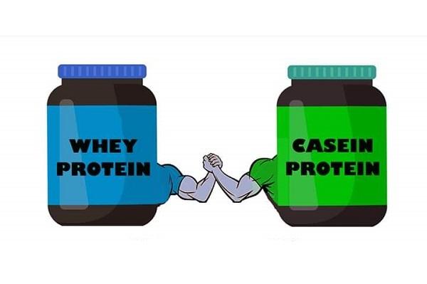 کازئین و عملکرد بیولوژیکی آن