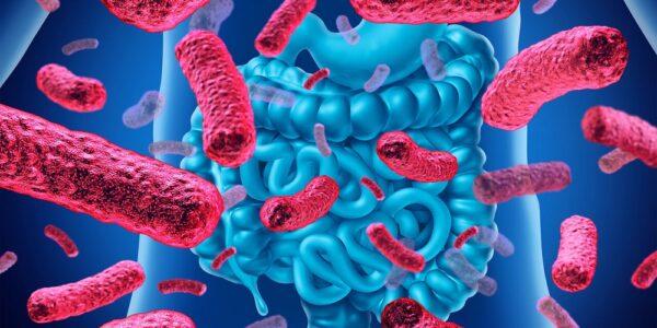 سلامت گوارش و پروبیوتیک